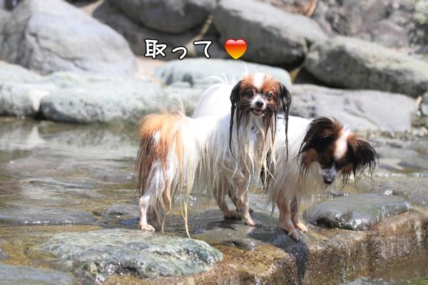 IMG_1729丹沢 川遊び川遊び