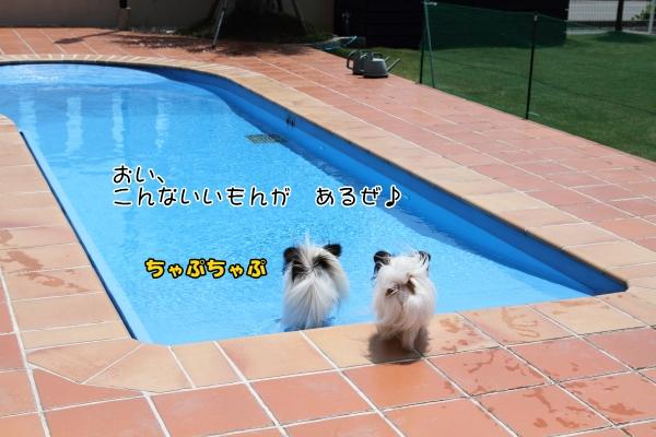 IMG_9811LADFLADF.jpg