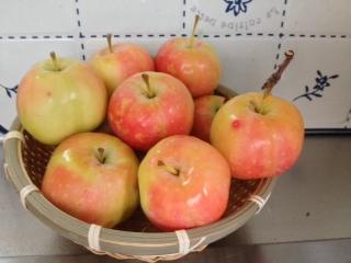 彦根りんご2