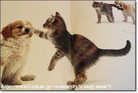 A CAT'S LIFE!