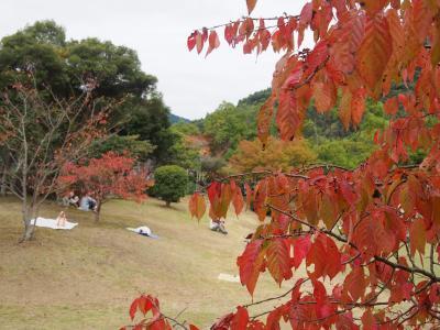 米泉湖 紅葉