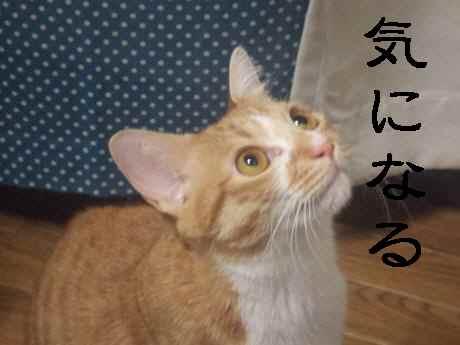 002_convert_20130908191237.jpg