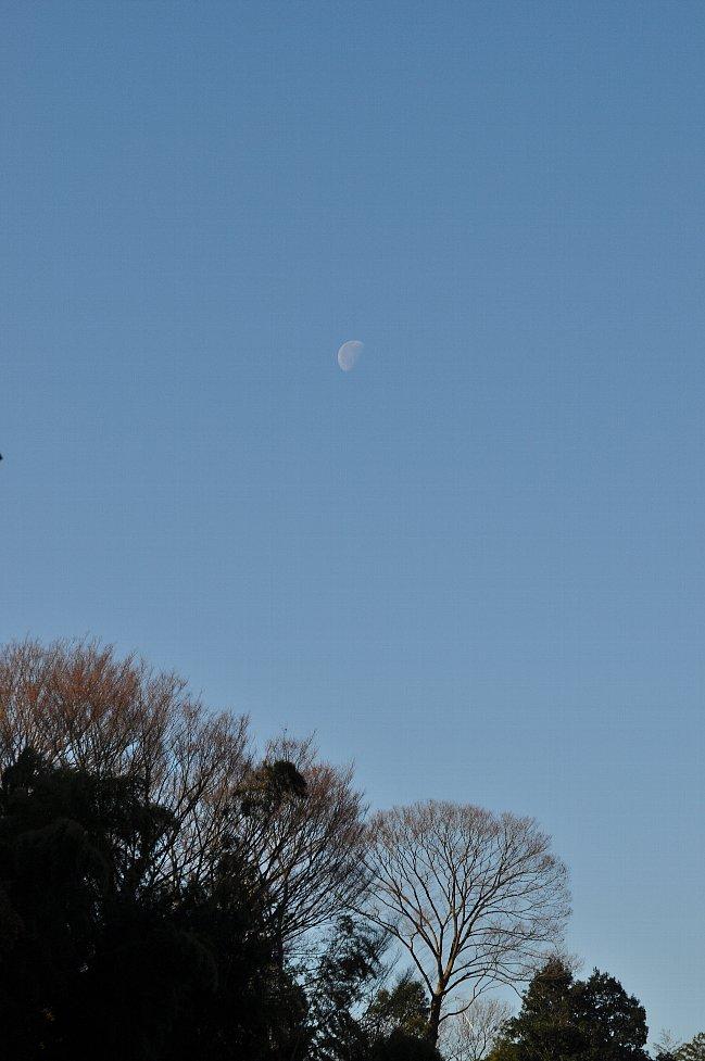 131226 けやき下弦の月