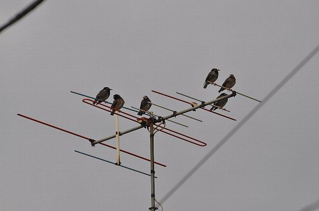 140116 むくどり VHF帯水平偏波