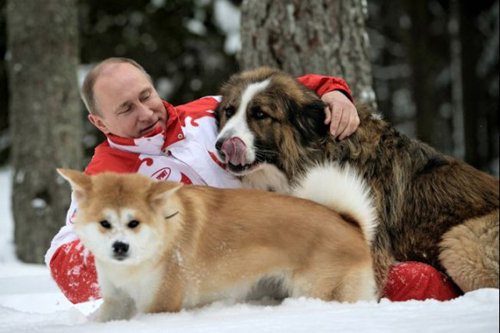 プーチン 秋田犬とシェパード