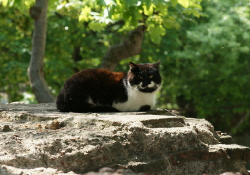 猫5 (2)