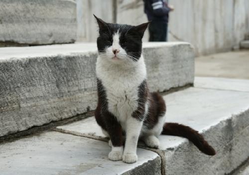 猫4 (2)