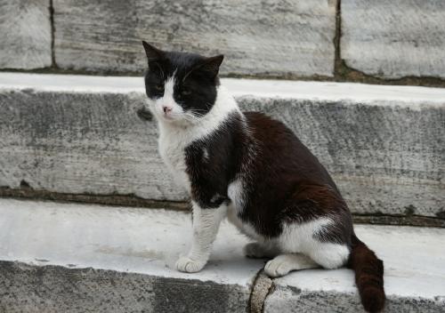 猫3 (2)