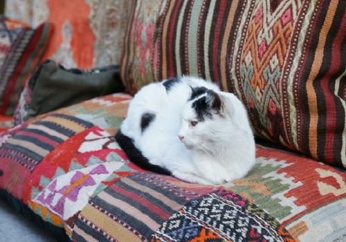 猫1 (2)