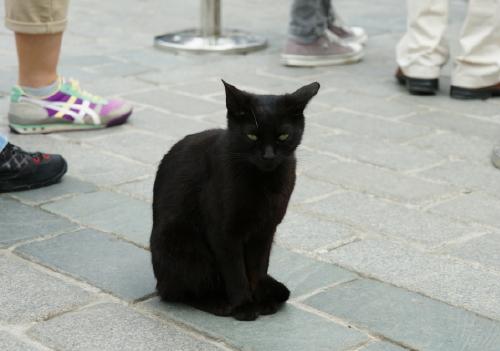 猫8 (2)