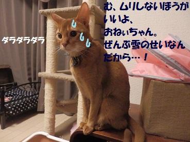 P2083871.jpg