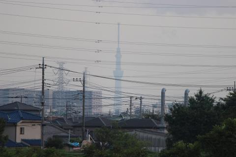 三郷から見たスカイツリー(20130902)