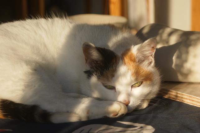 猫5 266