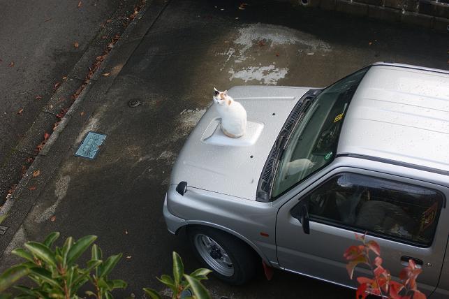 猫5 245