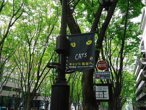 1305cats001.jpg
