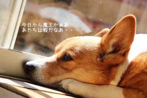 image_20130722120211.jpg