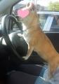 in a car2