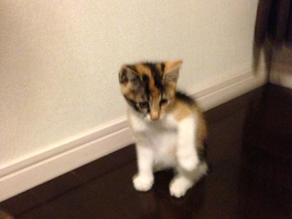 おてんば猫娘のラキ☆