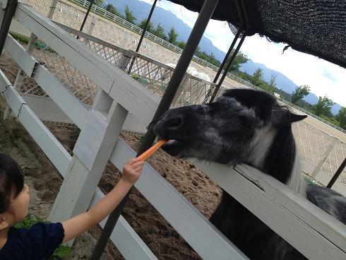 馬に餌やり