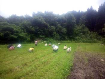 田の草刈り