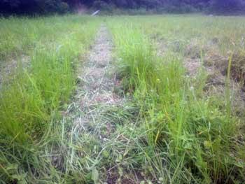 草刈り後の田の様子