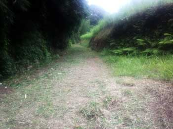 草刈りした農道