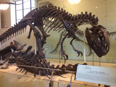 アメリカ バイク ツーリング ニューヨーク 自然史博物館 恐竜