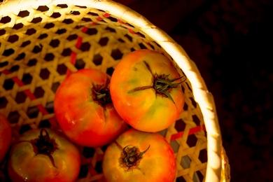 SHIO63_zarutomato500-thumb-390_jpgauto-3403.jpg