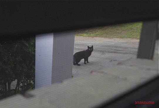 愛しの黒猫ちゃん1