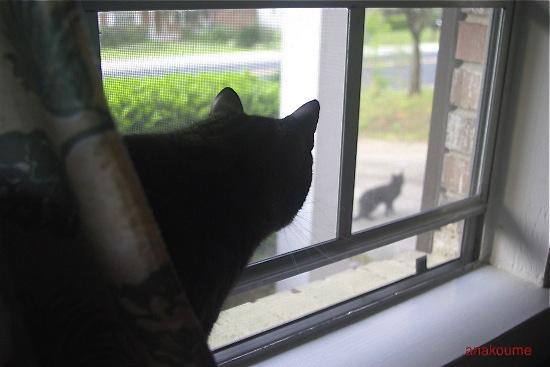 愛しの黒猫ちゃん2