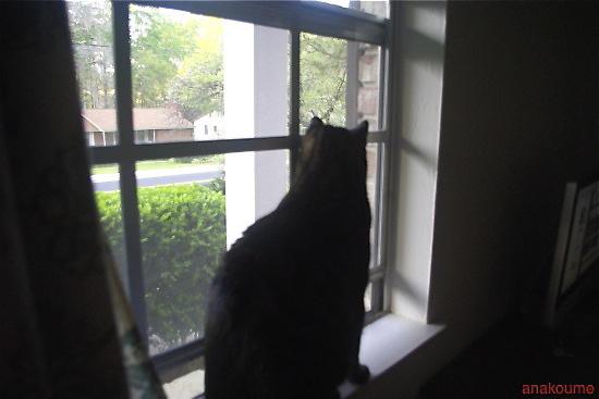 愛しの黒猫ちゃん3