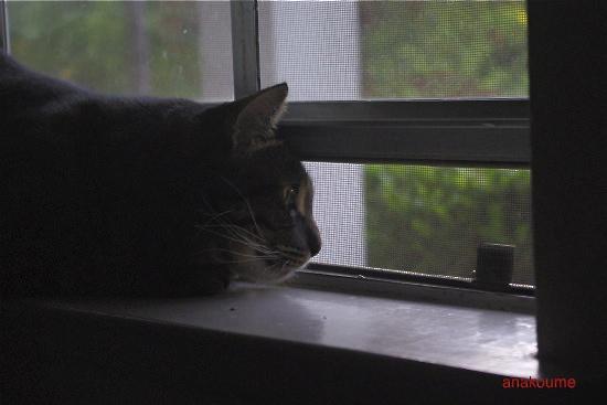 愛しの黒猫ちゃん5