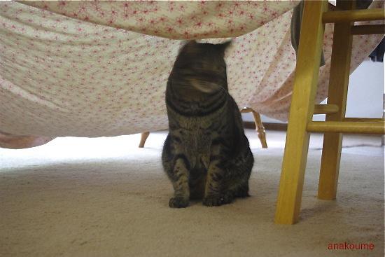 シーツのテント1