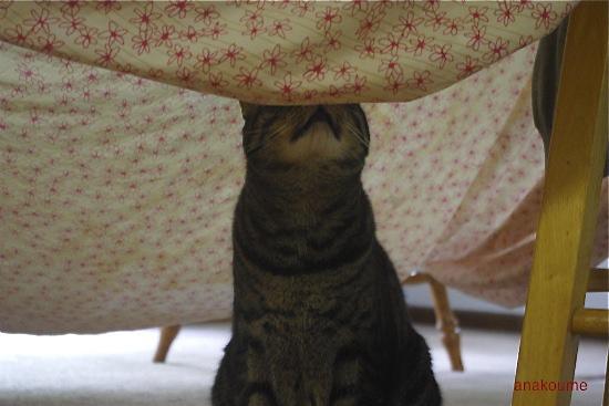 シーツのテント2