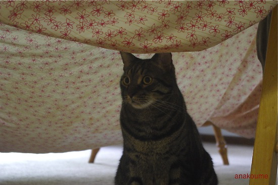 シーツのテント3
