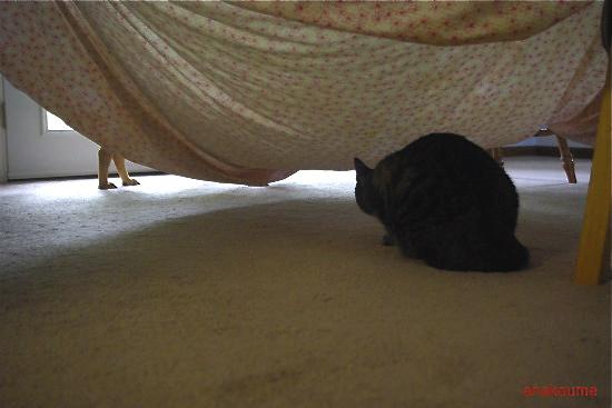 シーツのテント5