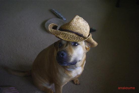 アナベラと麦わら帽子2