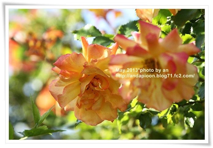 20130512_3295.jpg