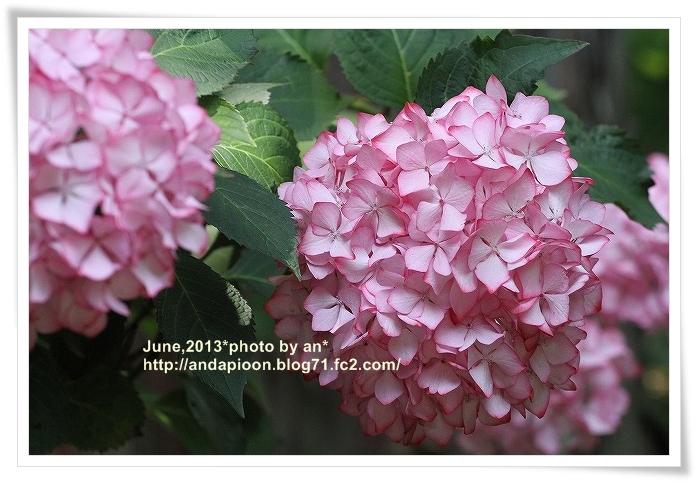 20130607_6678.jpg