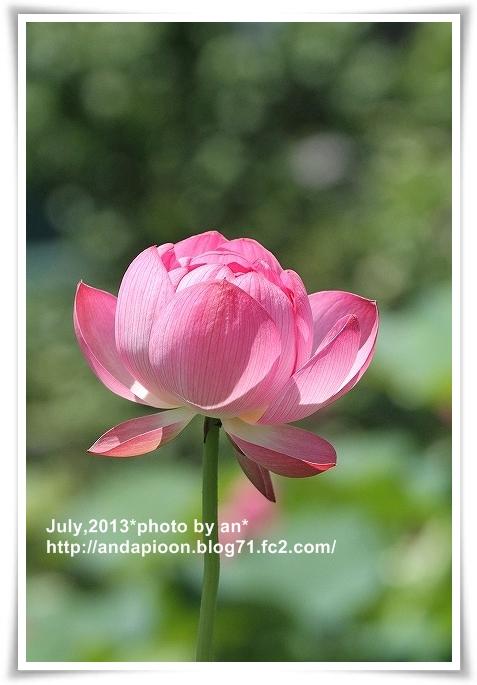 20130701_9017.jpg