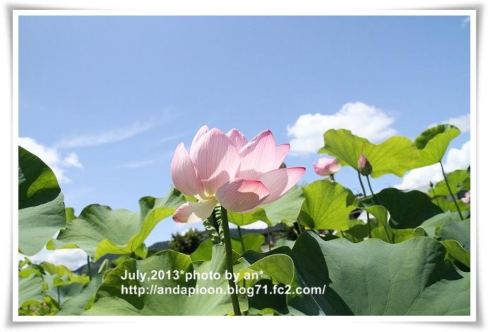 20130701_9199.jpg