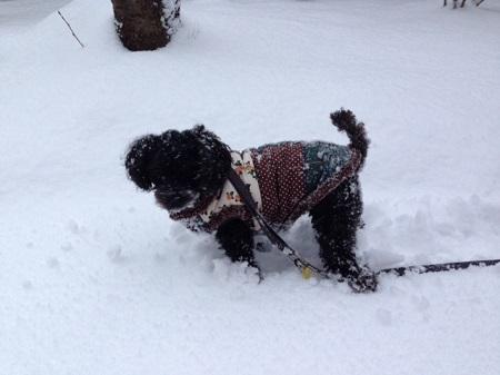 SNOW 2 (2)