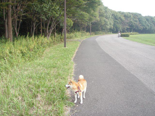 s-Anzu201010 017