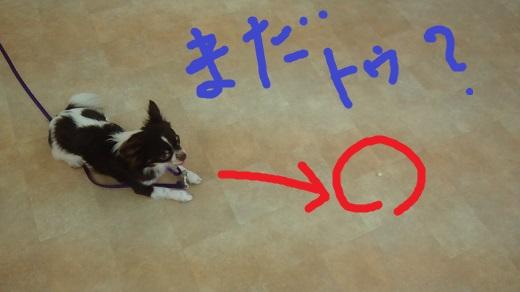 7run8.jpg