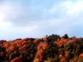 午下の放山