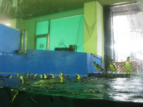 須磨水族園 035