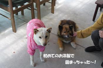 いちご&杏