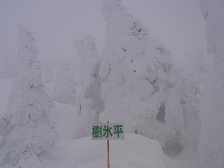 秋田県森吉山樹氷平