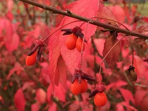 2013-11-03松山紅葉