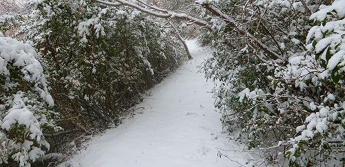 s-雪景色140208④
